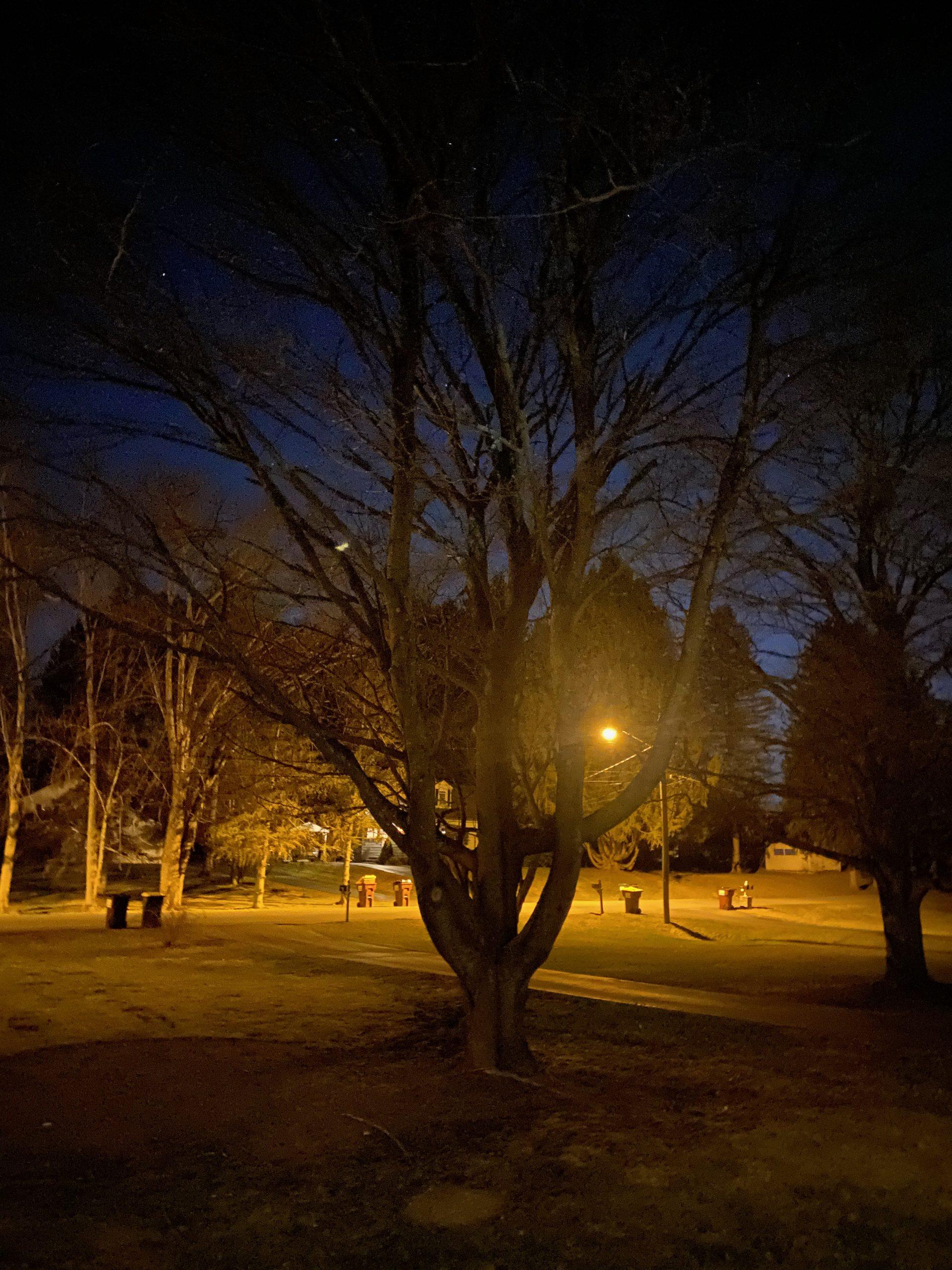 A tree in wynantskill ny without any uplighting