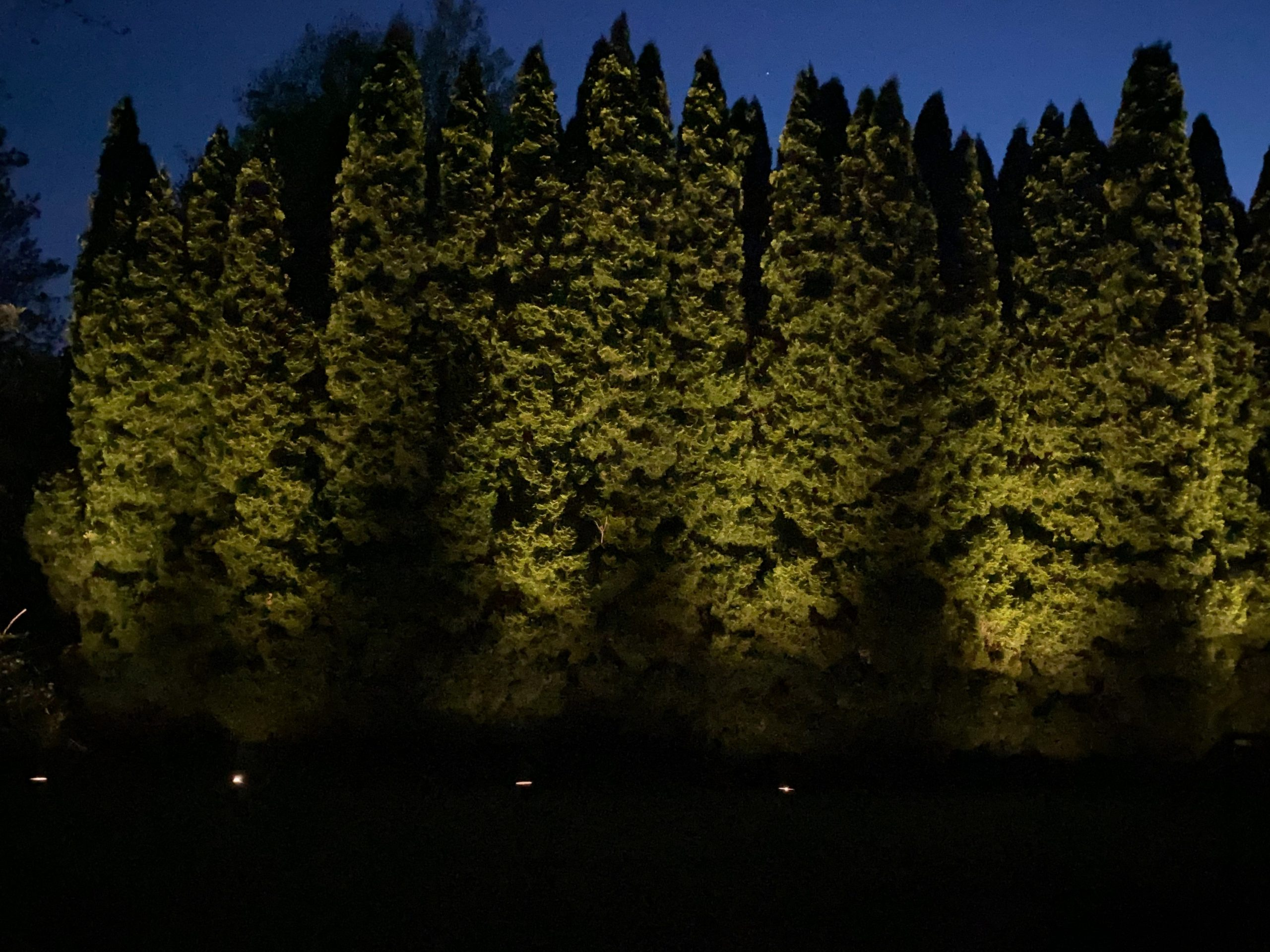 evergreen trees light with low voltage lighting