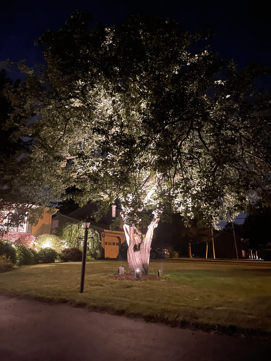 a tree with low voltage outdoor uplights on it