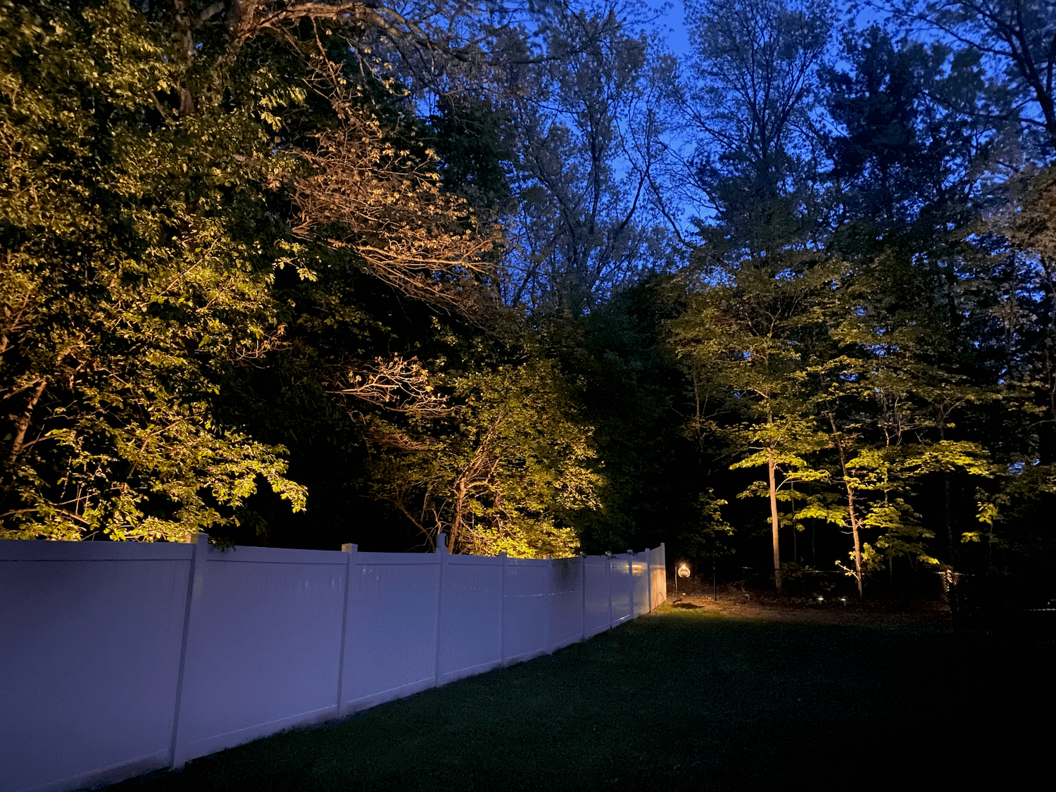 A tree line in the backyard lit up at night with low voltage up lighting